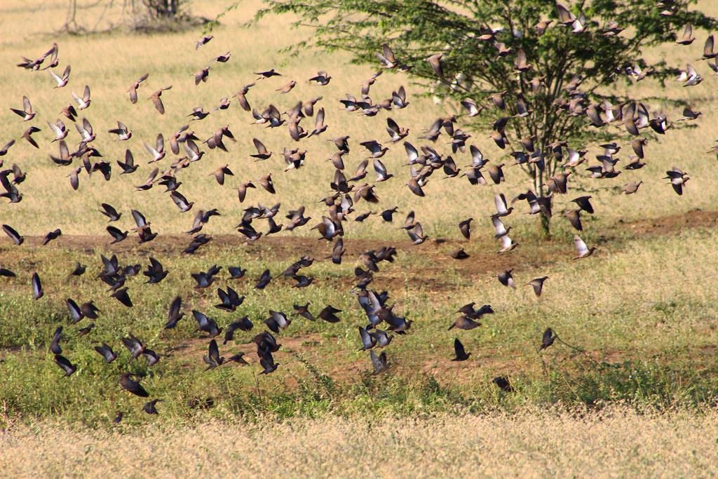 O vôo das cardinheiras e a sombra do corvo